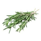 Plants for Living Organic Potted Rosemary