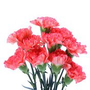 Seasonal Carnations