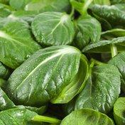 Organic Tatsoi Spinach