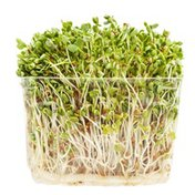Organic Clover Sprouts