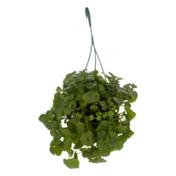 Dsfg Premium Foliage Hanging Basket