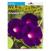 Burpee Morning Glory Grandpa Ott