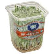 Sunny Creek Farm Wheatgrass, Organically Grown