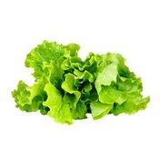 Organic Green Leaf Lettuce Bunch