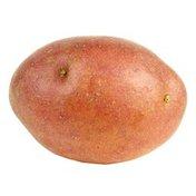 Organic Klondike Rose Potato