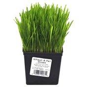 Wheat & Pet Grass