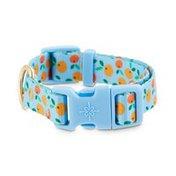 Good2 Go Small Orange Fruit Dog Collar