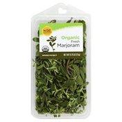 Wild Harvest Marjoram, Organic, Fresh