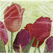 Party Creations Napkins, Spring in Bloom, 2 ply