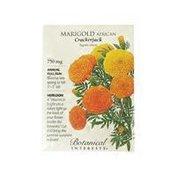 Botanical Interests Marigold African Crackerjack