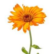 "Bayview Florist 15"" Stem Piccolini Gerberas"