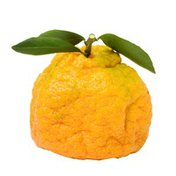 Organic Ugli Fruit
