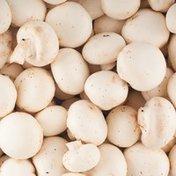 Organic White Mushroom