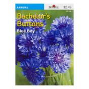 Burpee Bachelor's Buttons Seeds
