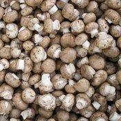 Giorgio Baby Button White Mushroom