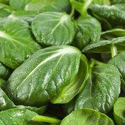 Organic Tatsoi Spinach Bunch