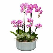 Debi Lilly Jalama Garden Orchid Arrangement