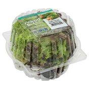 Mucci Farms Living, Lettuce, Trio Lettuce