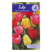 Garden State Bulb Company Tulip Darwin Hybrid Mixed
