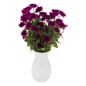 Ahold DIY Bunches Spray Mums