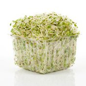 Sunsprout Fresh Radish Sprout Blend