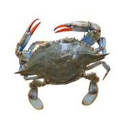 Blue Softshell Whole Frozen Crab