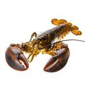 PICS Steamed Live Lobster