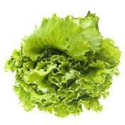 Inspired Greens Living Green CV Lettuce Batavia