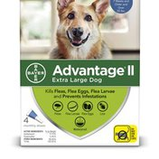Advantage Extra Large Dog One-A-Month Topical Treatment For Fleas & Lices