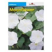 Burpee Moonflower Giant White