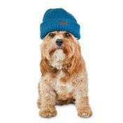 Redy Large Extra Large Red Blue Patch Beanie