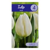 Garden State Bulb Company Tulip Bride