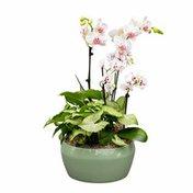 Debi Lilly Padaro Garden Orchid Arrangement