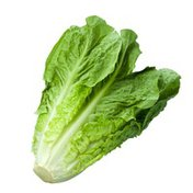 Romaine Lettuce Bag