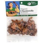 Terra Dolce Organic Chanterelle Mushrooms
