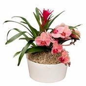 Westerlay Orchids Sheila Garden Orchid Arrangement