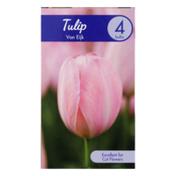 Garden State Bulb Company Tulip Van Eijk