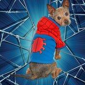 Marvel Small Spiderman Hoodie