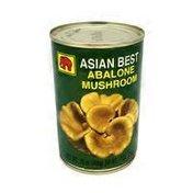 Asian Best Abalone Mushroom