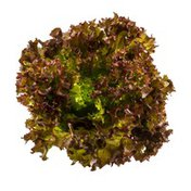Burpee Organic Lettuce Gourmet Blend
