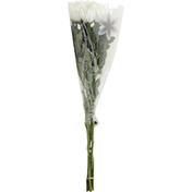 Safeway Bouquet, Disbud CB