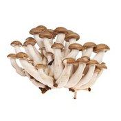 Organic Hon Shimeji Mushroom