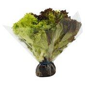 Lettuce, 3-in-1