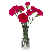 Ahold DIY Bunches Stem Carnations