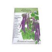 Botanical Interests Organic Burgundy Bush Royal Bean