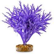 Large Purple Water Fern Image