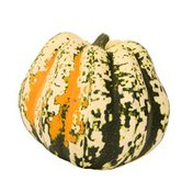 Carnival Squash Package