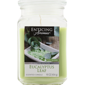 Enticing Aromas Candle, Eucalyptus Leaf, Soy Blend, Scented