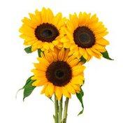 Avanti Small Sunflowers In Glass Vase