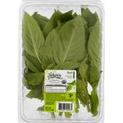 Nature's Promise Basil, Organic